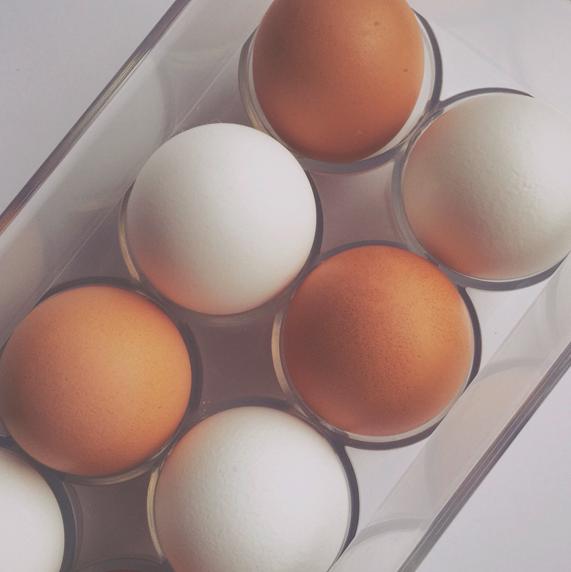 egg_2_web_xl