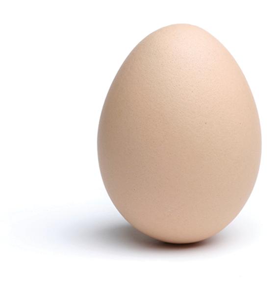 egg_3_web_xl